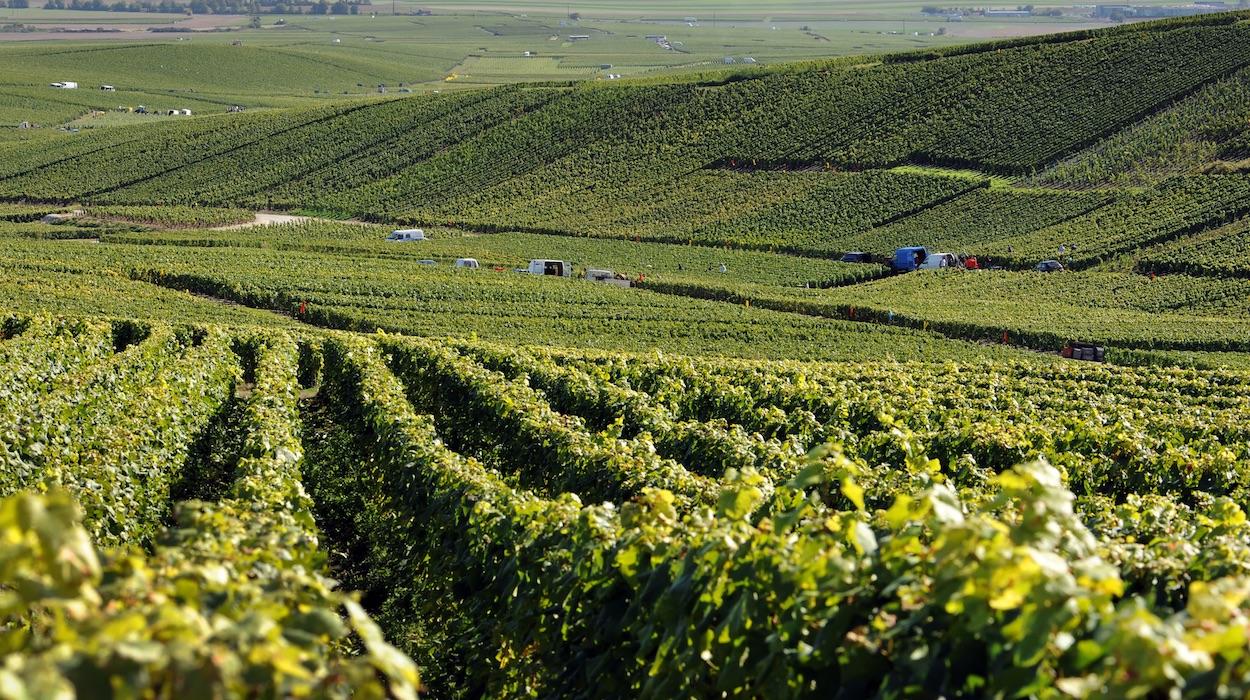 Vignerons-de-champagne-travail-de-la-vigne-epernay-cote-des-blancs